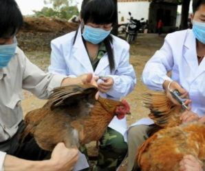 How To Protect Yourself from Bird Flu