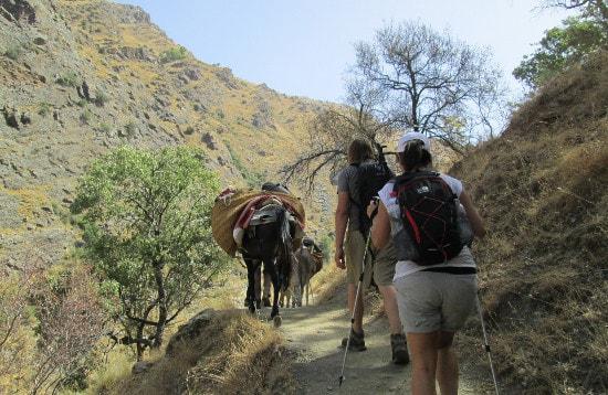 Trekking the Sierra Nevada with Mules