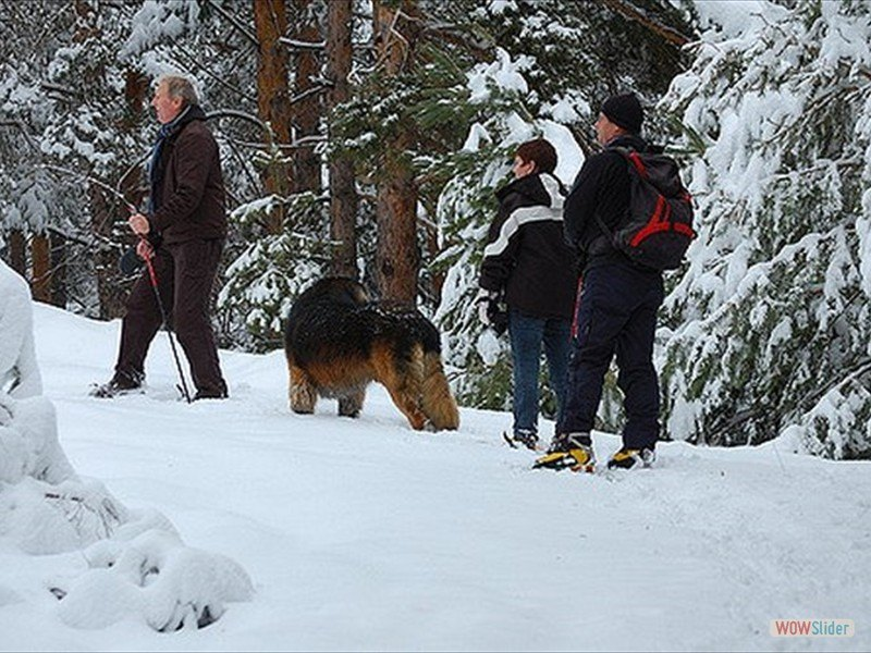 snowshoeing-dogs-8_4359193310_m-min