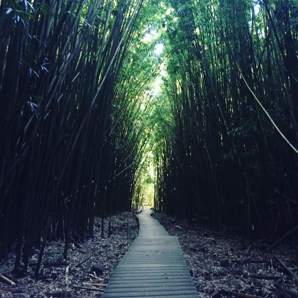 Pipiwai Bamboo Trail