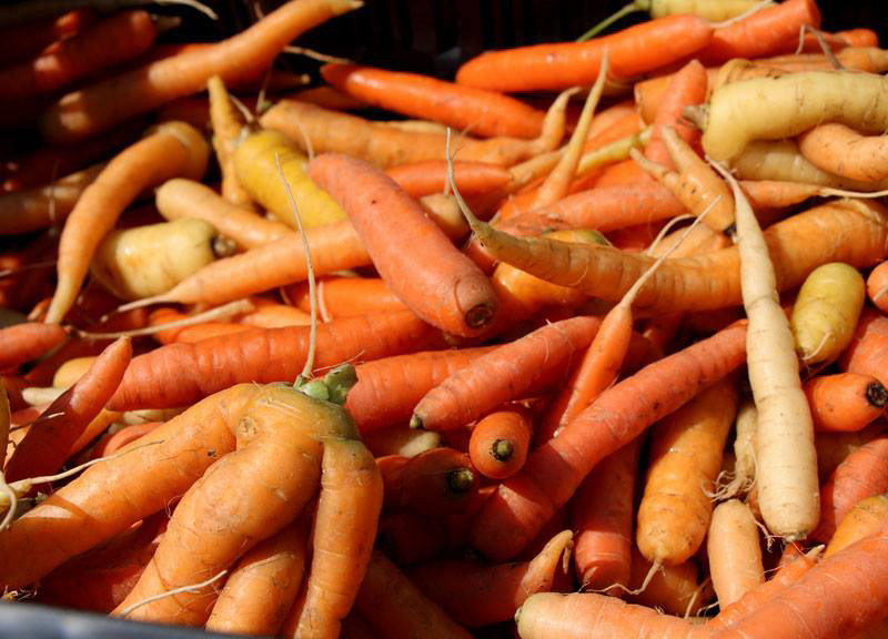 Wellness Institute Farmers' Market
