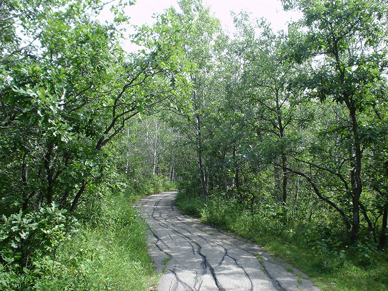 Assiniboine Forest / Harte Trail