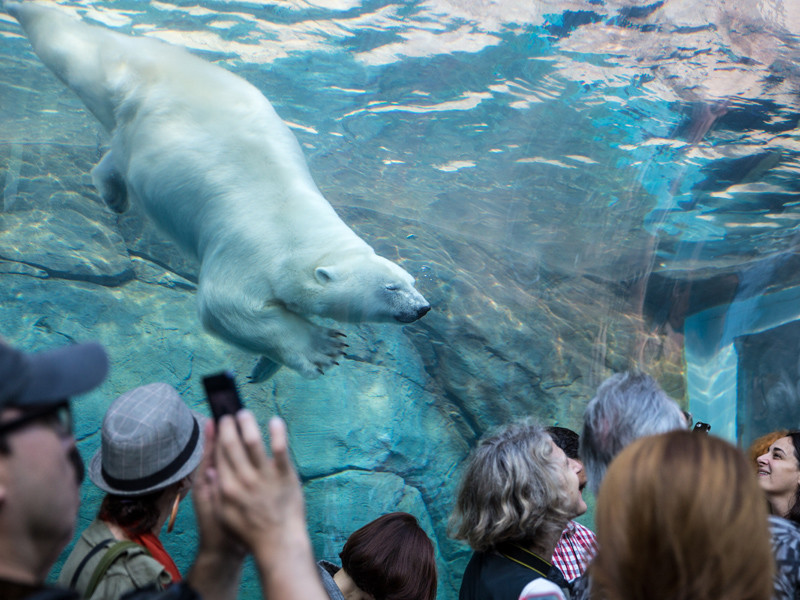 Assiniboine Park Zoo: Guided Walking Tour - Journey to Churchill