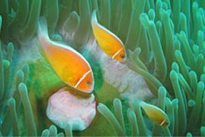 Guam Pauls Diving Image 03