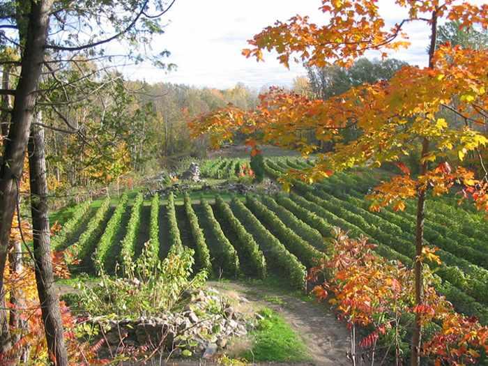 Vignoble Domaine des 3 Moulins