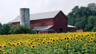 �Sunflowers�/