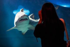 �Shark