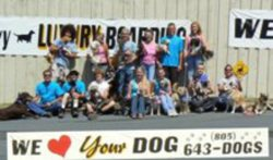 Ventura Highway Luxury Boarding for Dogs