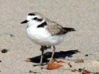 Ormond Beach/Pt. Hueneme Beach