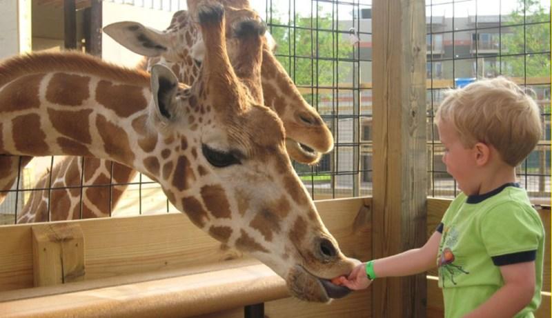Giraffe Pack