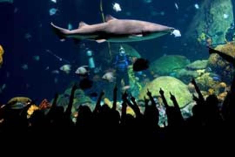 319_1555_shark.jpg
