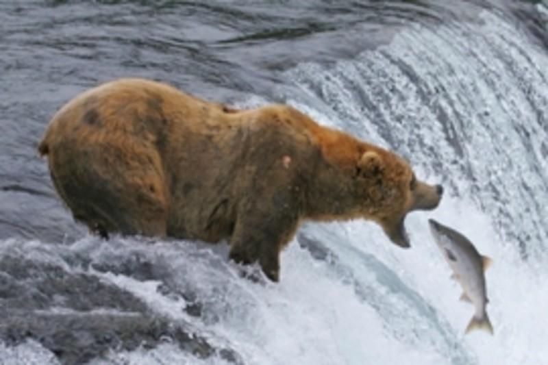 National Parks bear