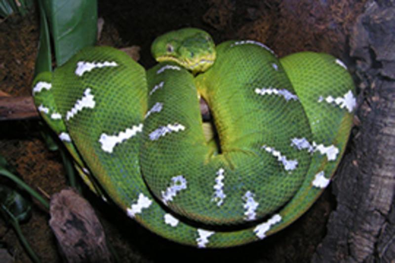 Snake at Chattanooga Zoo