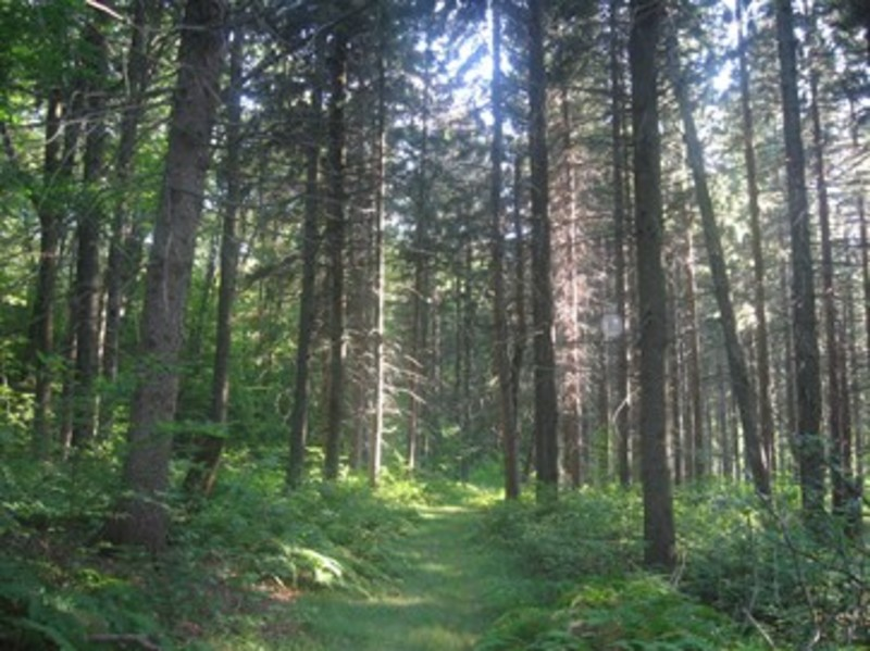 Maple Valley State Forest