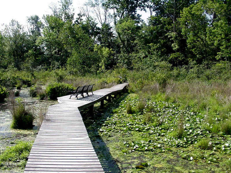 Goodyear Swamp Sanctuary