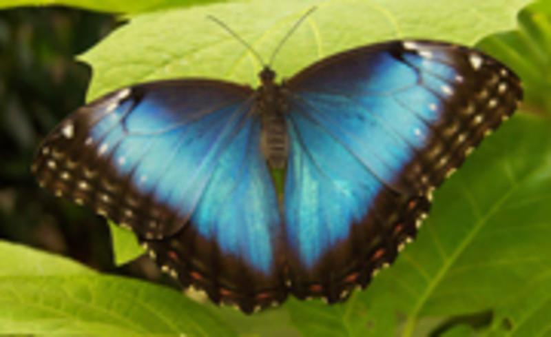 Joseph L. Popp Jr. Butterfly Conservatory