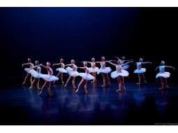 �Swans_longshot�/