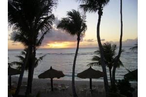 Coco Palm Beach Garden Image 01