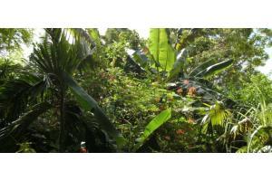 Guam Zoo 1