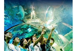 Underwater World 3