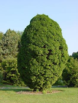 Photo of Bernheim Arboretum & Research Forest