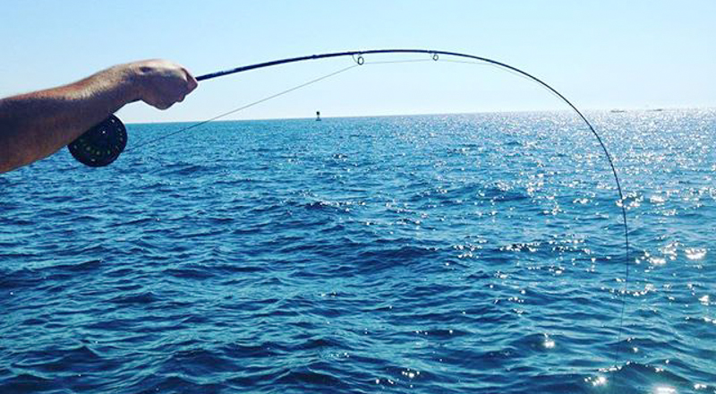 Patterson light tackle fly fishing charters for Newport ri fishing charters