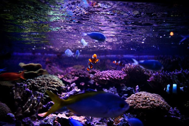 Check out the amazing wildlife living just below the surface of our world's oceans, lakes, and rivers when you visit Dallas World Aquarium in Dallas. This aquarium is kid-friendly, so little ones are welcome to tag handhellpec.ga a close parking spot on the street or in a parking lot near Dallas World Aquarium. So take a dive into the wonders that await within the world's oceans, lakes, and rivers.