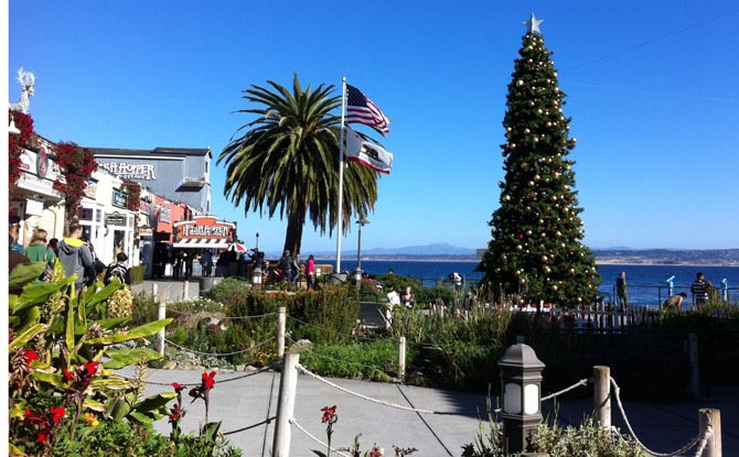 Cannery Row Holiday Tree