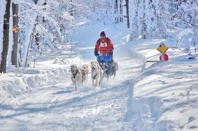 Happy sled dogs. (Photo from Kalkaska Winterfest.)