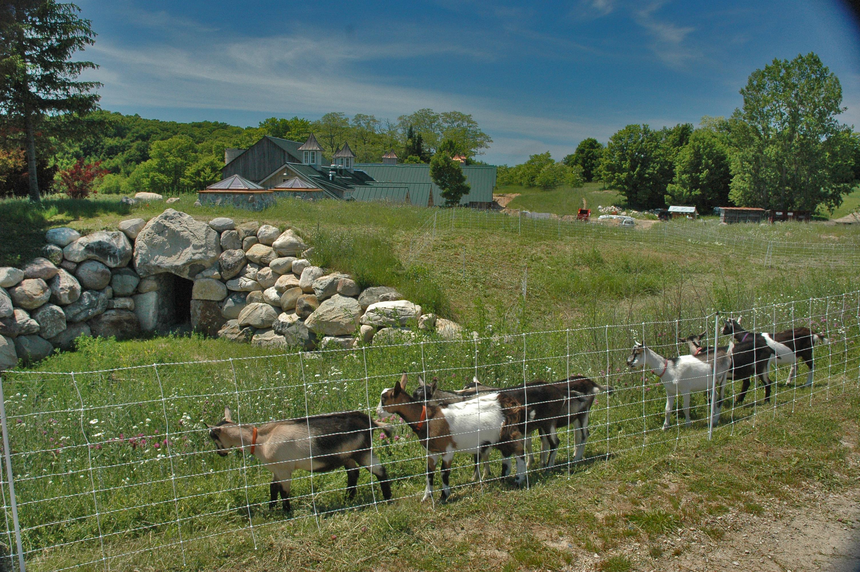 Idyll Farms (4)
