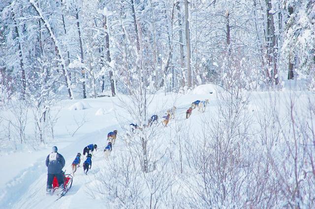 Mushing through the forest. (Photos from Kalkaska Winterfest.)