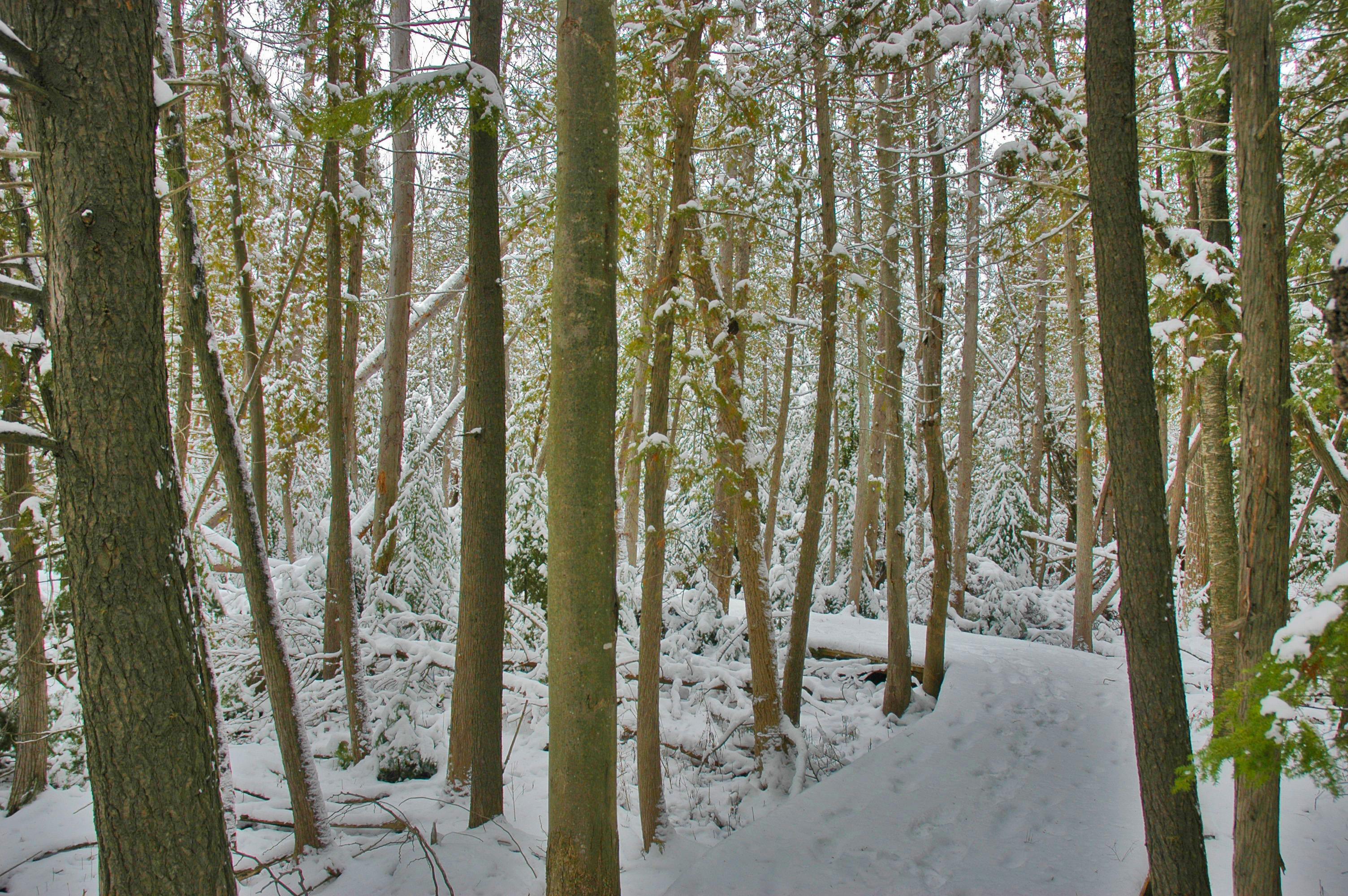 Winter reasserts itself today!