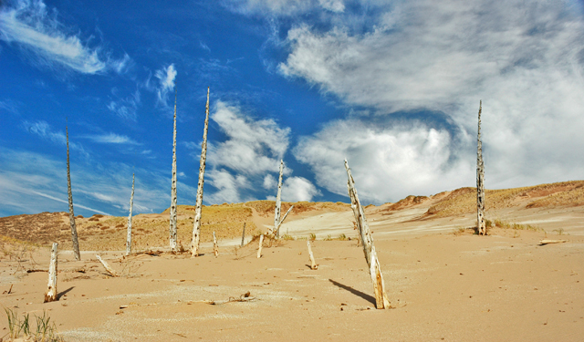 The ghost forest.