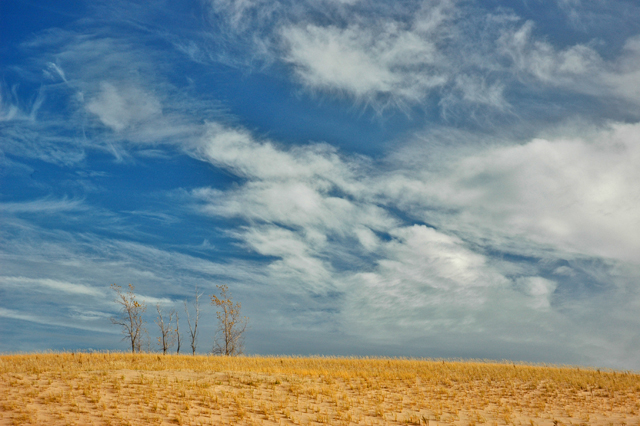 November at Sleeping Bear: dune grass, cottonwoods and clouds.