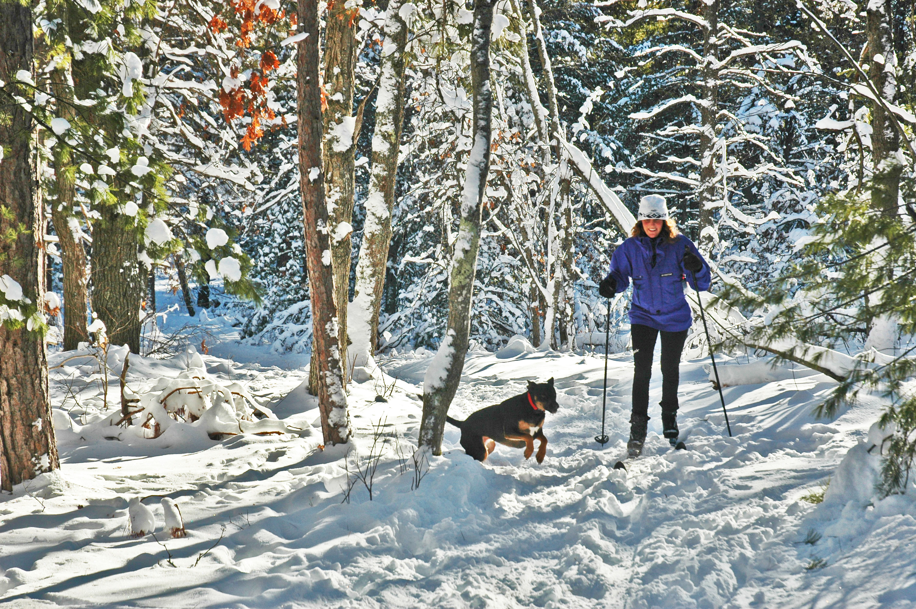 A skier and her canine companion enjoy the trail at Sand Lakes.