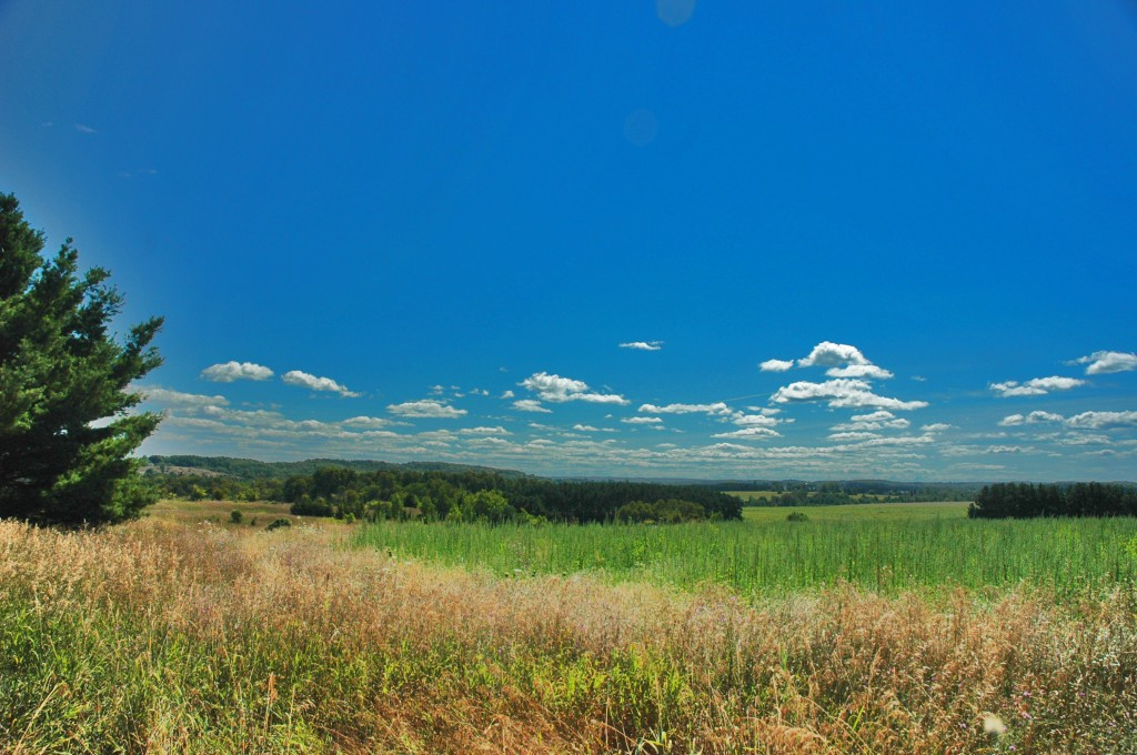 A pastoral view eastward from Sayler Road.