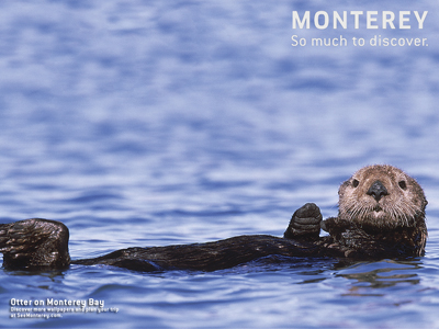 Monterey's most adorable otter
