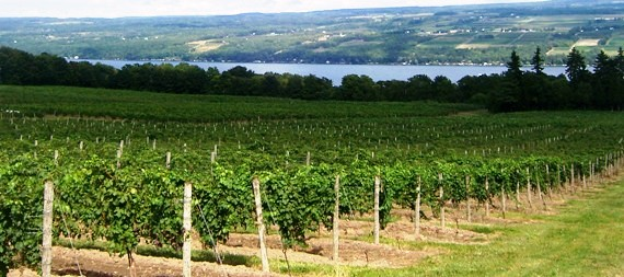 best wineries in finger lakes