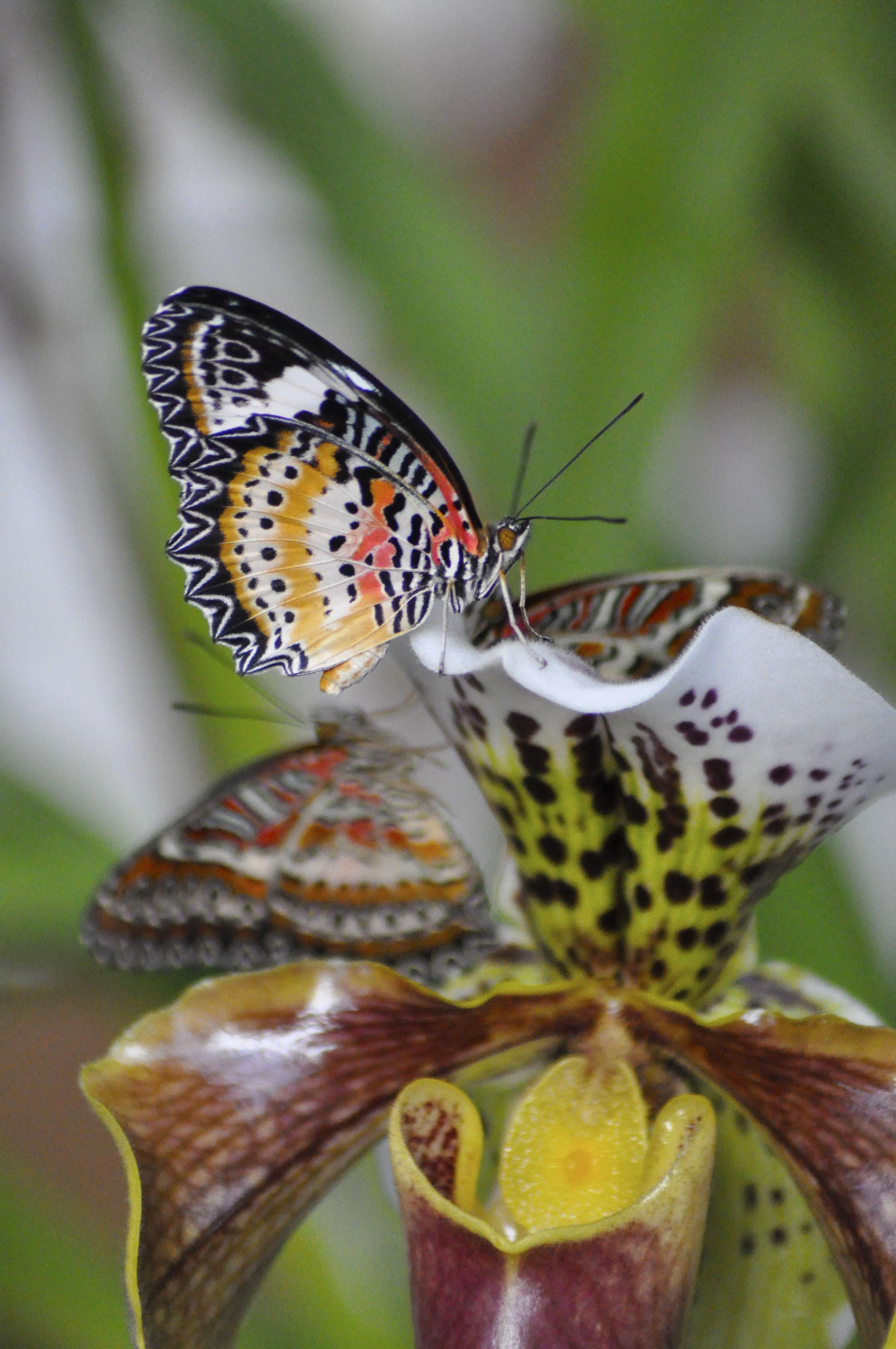 Butterflies Are Blooming At Meijer Gardens