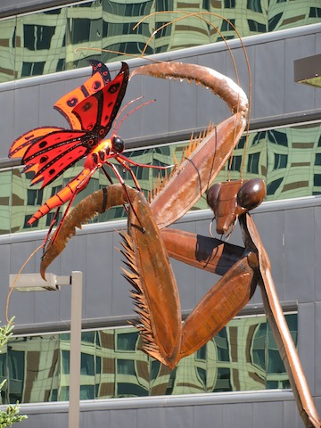 Mantis Dreaming by Bill Secunda - Art Prize Entrant