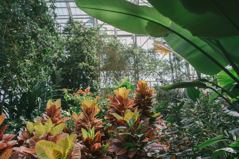 Meijer Gardens Conservatory photo by Jeff Denapoli