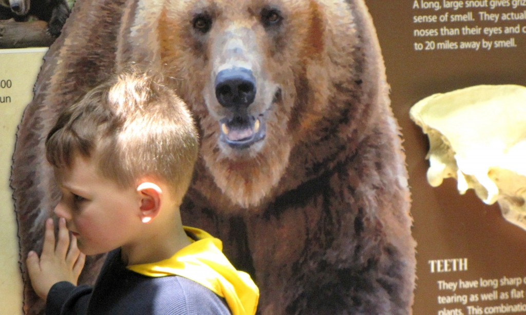 child at the grizzly bear sign at the John Ball Zoo