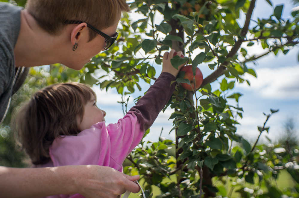 Picking Apples at a Grand Rapids Apple Orchard