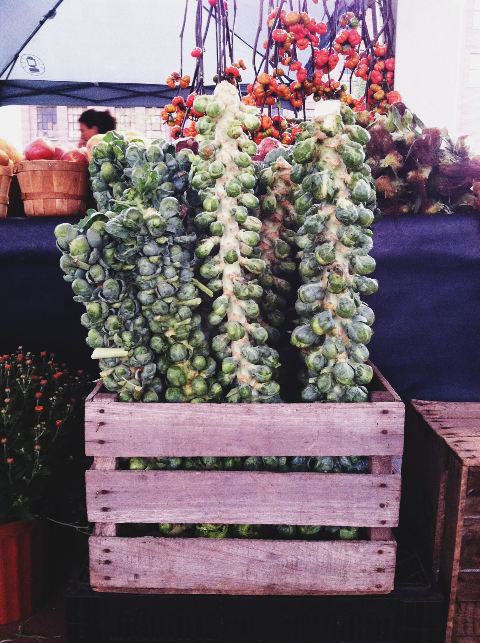 Brussels Sprouts Ready for Roasting, photo courtesy Downtown Market