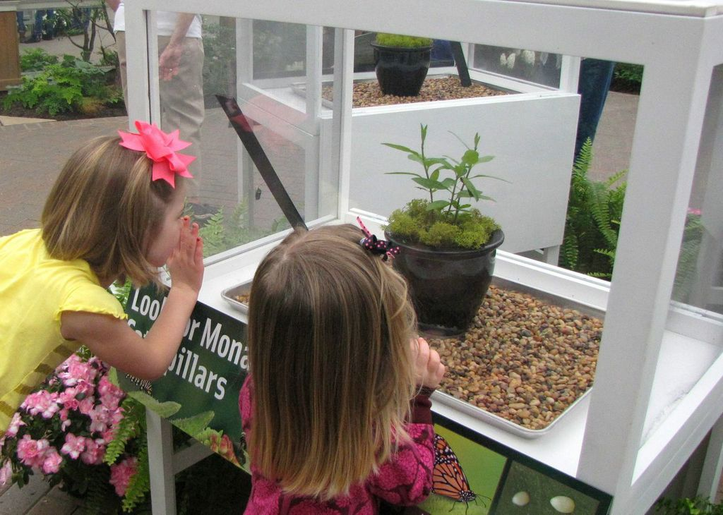 Observing Caterpillars at Frederik Meijer Gardens
