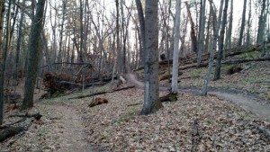 Luton Trail