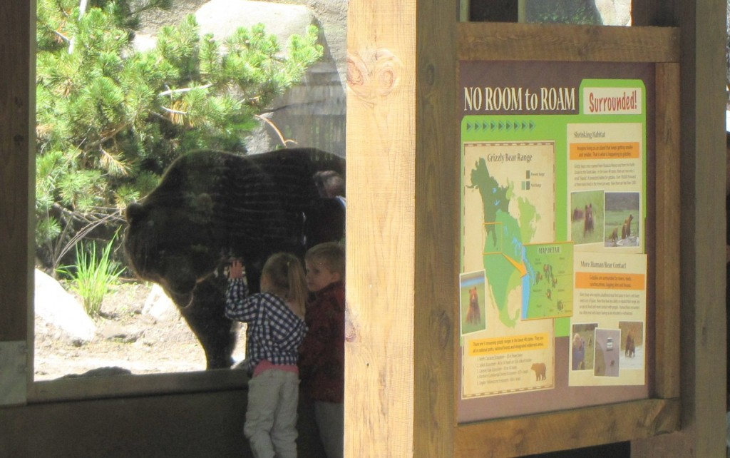 Children watching Grizzly Bear at the John Ball Zoo in Grand Rapids