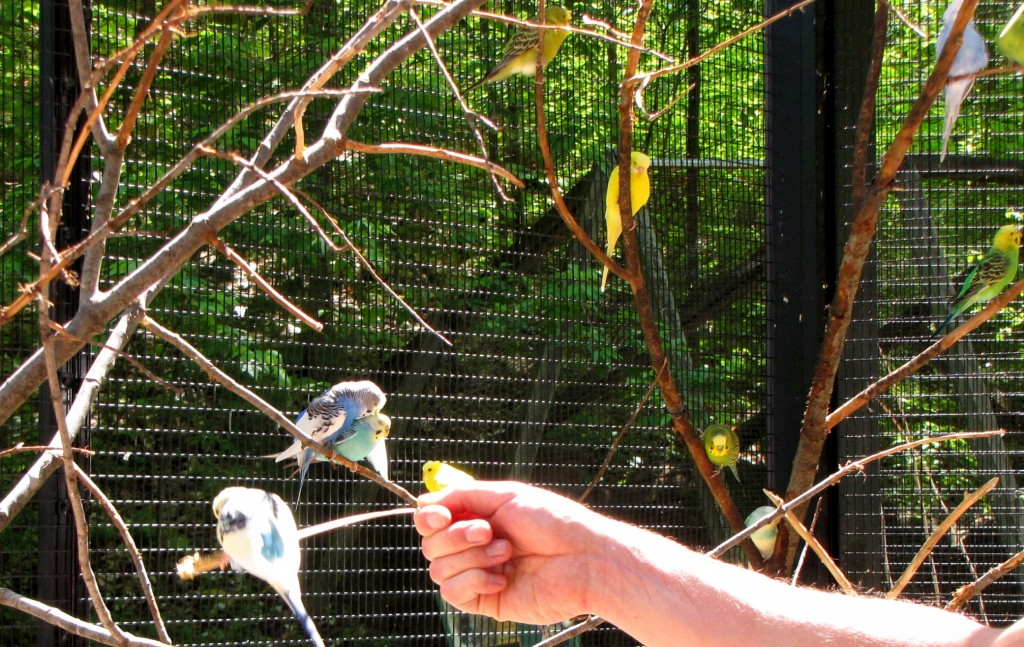 Feeding parakeets at the John Ball Zoo
