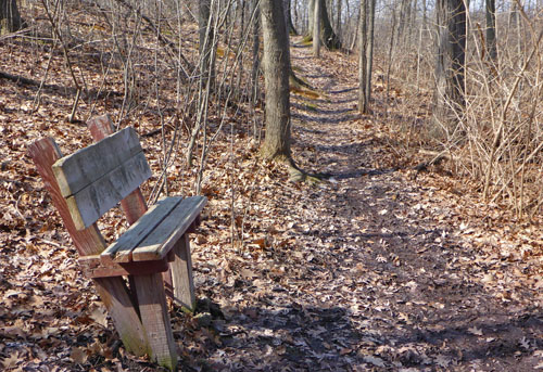 Park bench on the Hodepyl Woods trail in Grand Rapids