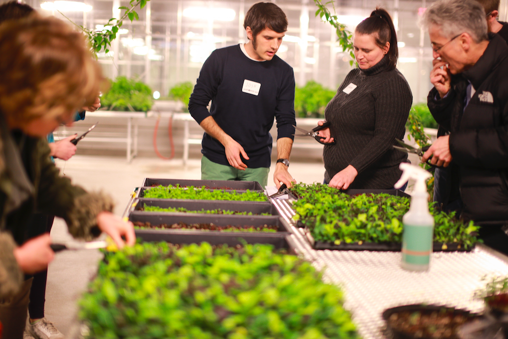 Plant-focused classes are held in the greenhouses.